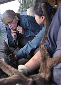 Alaska Veterinary Education Advocates Cite Unique Needs Vin