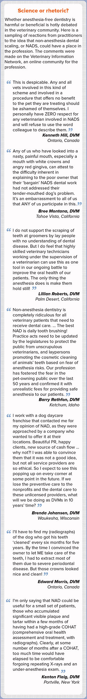 Debate rages over anesthesia-free dentistry - VIN