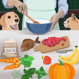 Recipes for home-cooked cat foods fall
