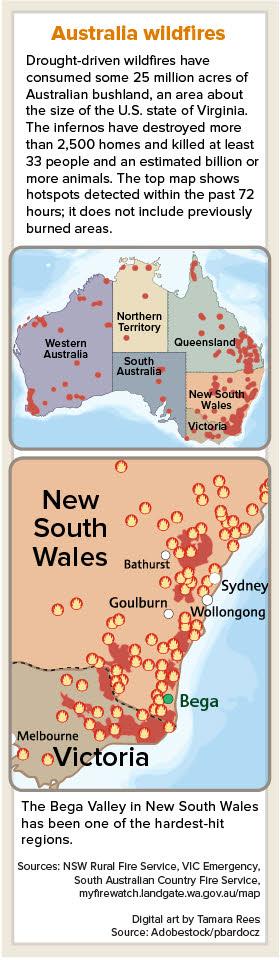 Veterinarians Mobilize To Treat Australian Wildfire Victims News Vin