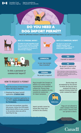 Canada Cracks Down On Illegal Dog Importations News Vin
