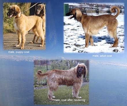 Pet spay-neuter studies spotlight health risks, benefits - VIN